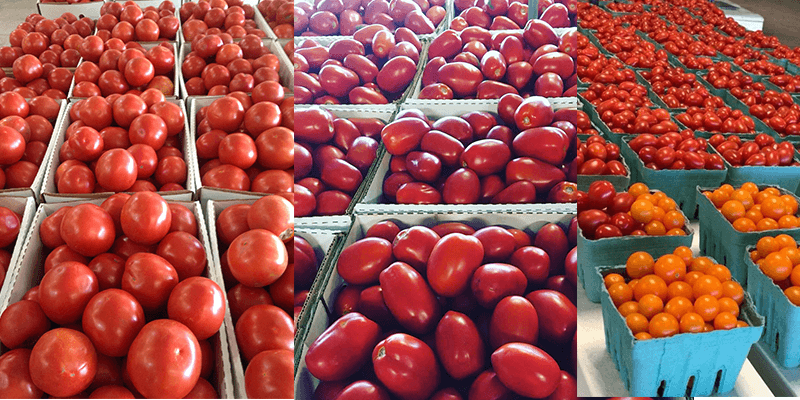 Homegrown cherry tomatoes, grape tomatoes, roma tomatoes and canning tomatoes available at Keil's Produce and Greenhouse, in Swanton, OH.