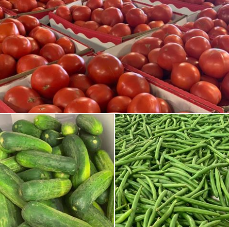 Canning vegetables, fresh great beans available at Keil's Produce and Greenhouse near Toledo Ohio.